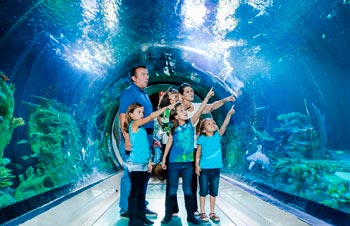Sea Life Sanctuary, acuario con gran número de animales marinos. Scarborough