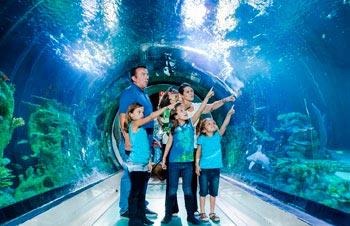 Sea Life Sanctuary, acuario con gran número de animales marinos. Scarborough